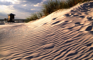 Sand dune on the beach in Pinellas County Florida