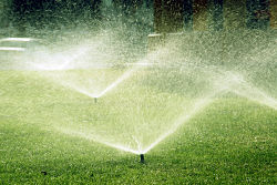 What days can I water my Cape Coral lawn