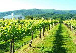 Charottesville Vineyards