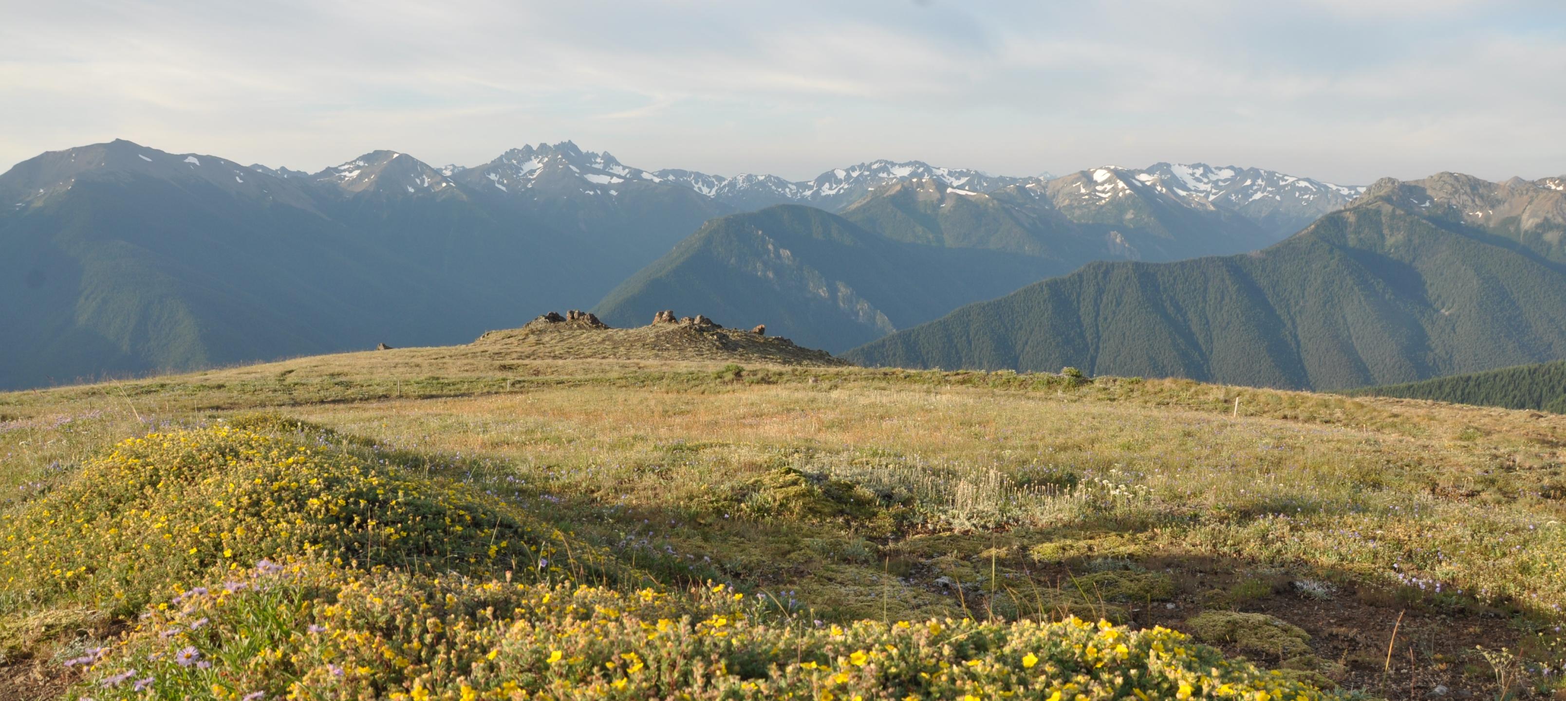 Homes For Sale Deer Lake Washington
