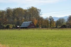 randle farm