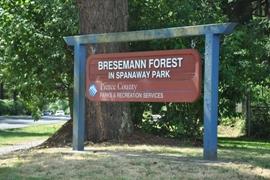 bresemann forest