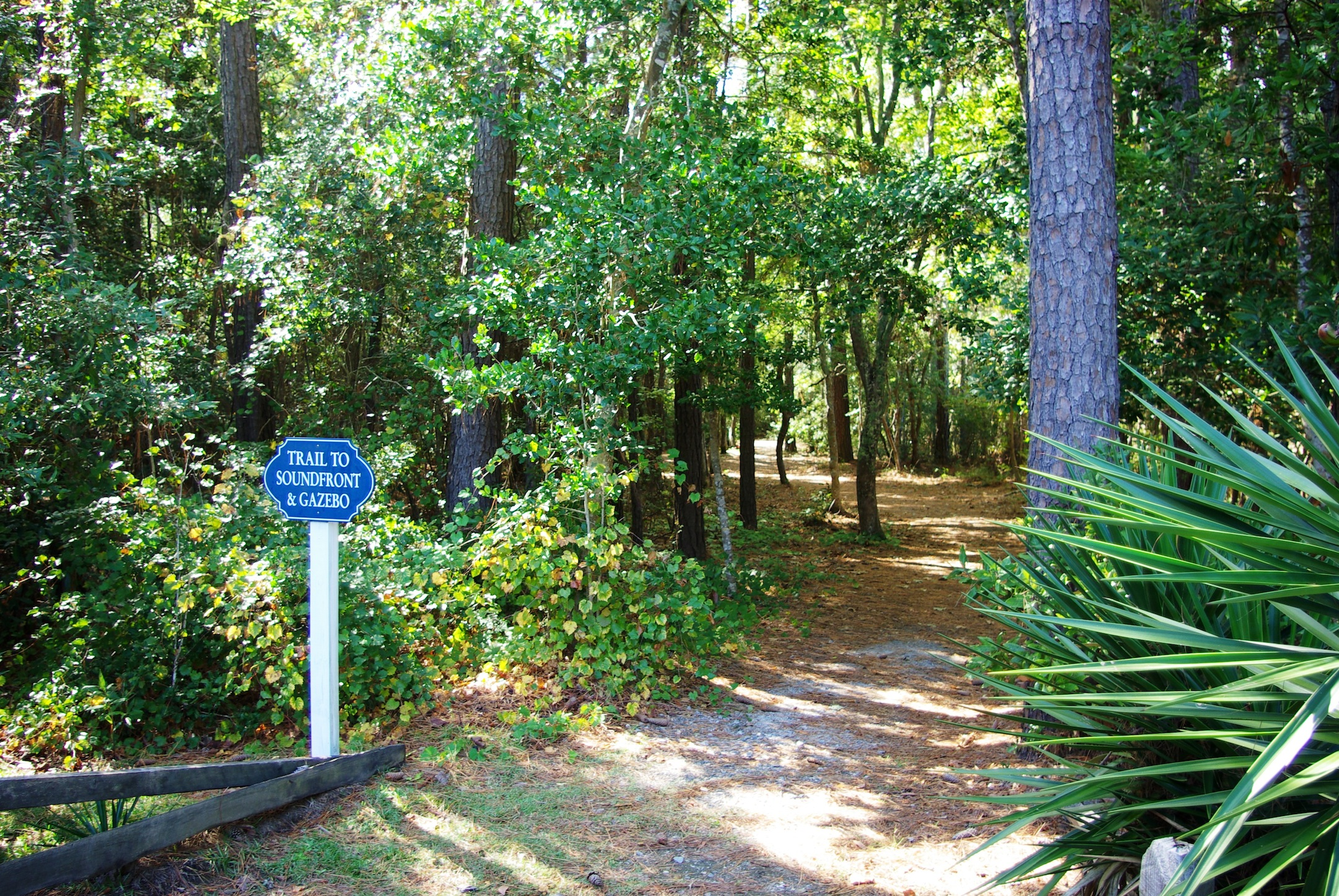 Croatan Woods trail to sound