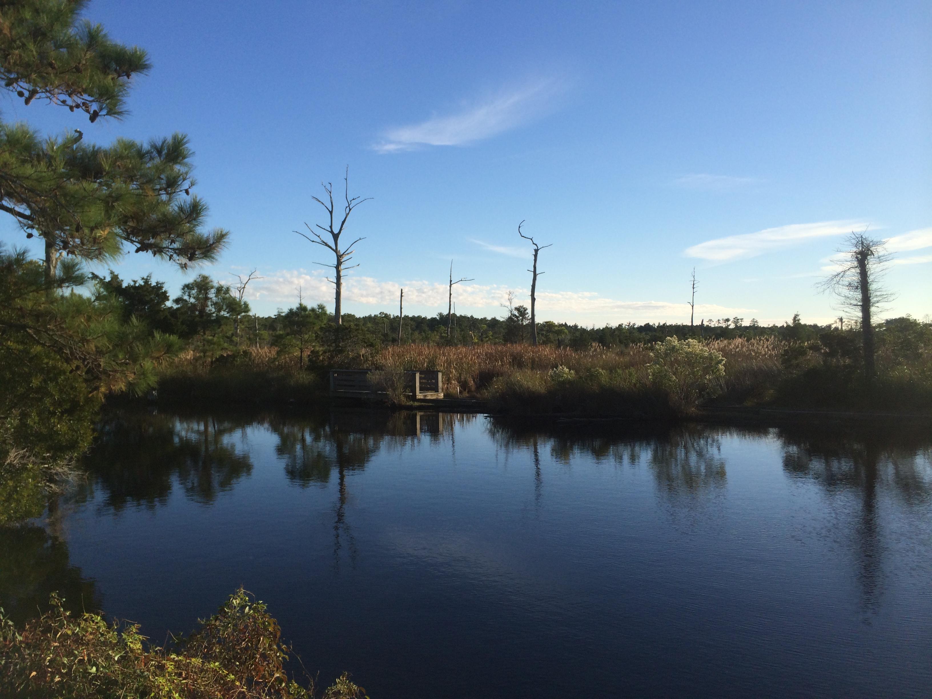 Cypress Cove Saltwater Marsh