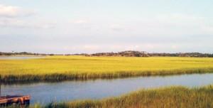 Salt grass on the Cape Fear River