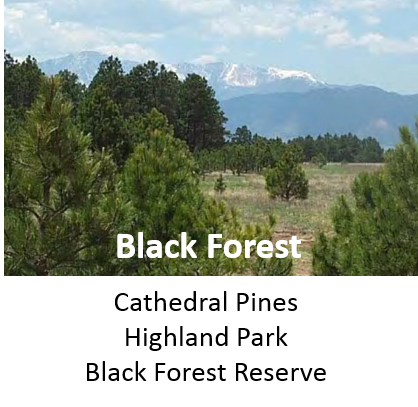 Colorado Springs Black Forest Neighborhoods and Homes for Sale