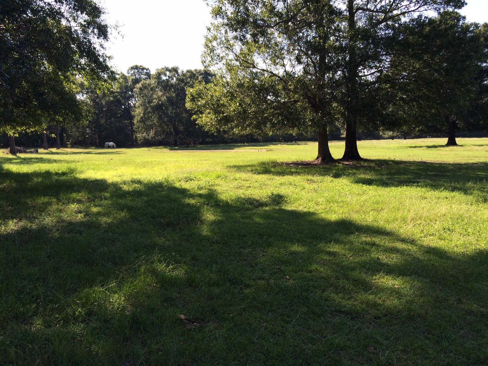 Columbia SC farm and acreage for sale