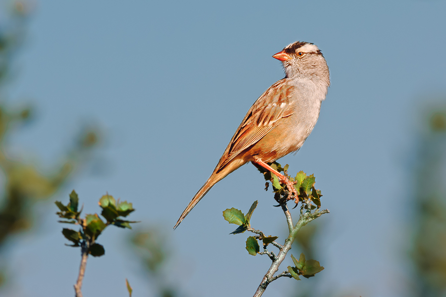 Learn about migratory birds on San Antonio real estate.