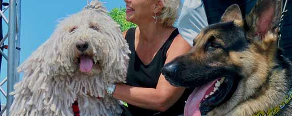 14th Annual Cardiff Dog Days of Summer 2019 San Diego CA
