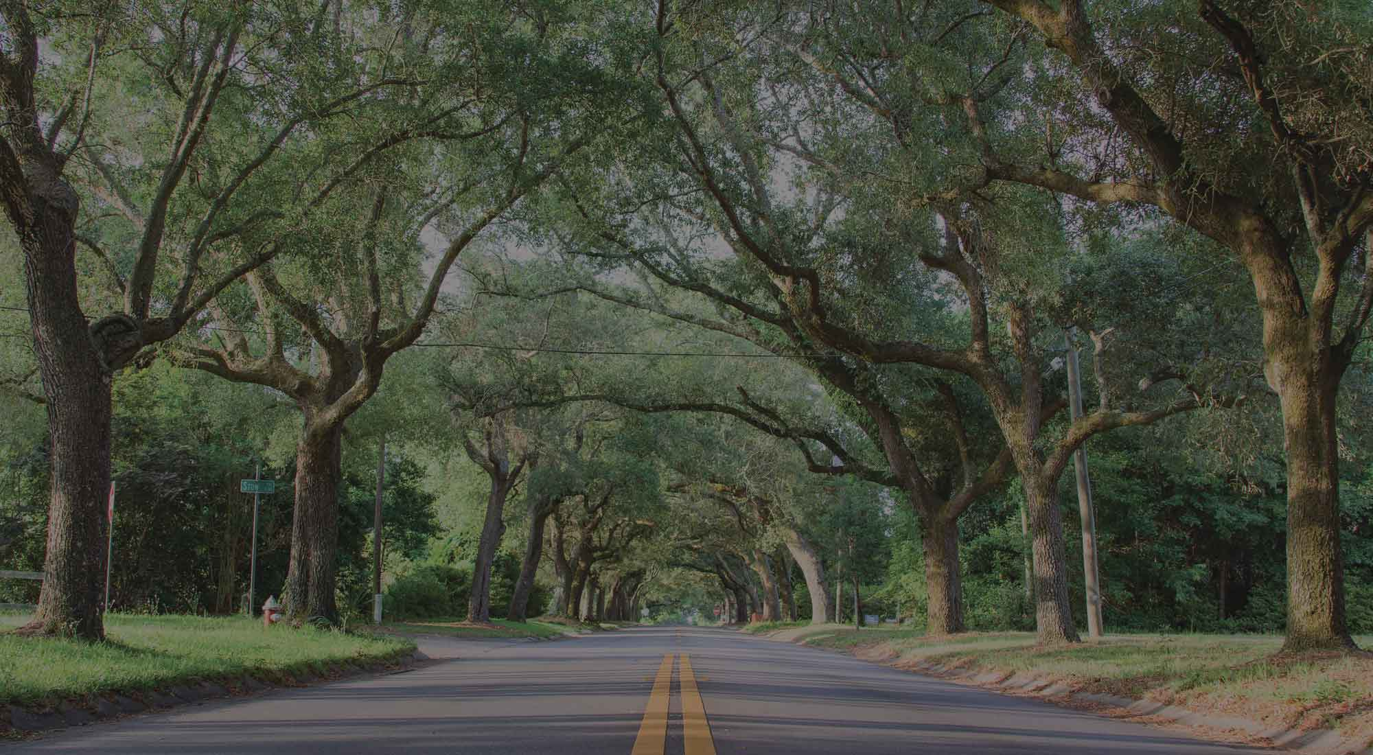 photo of East Hill tree tunnel of live oaks on 12th Avenue