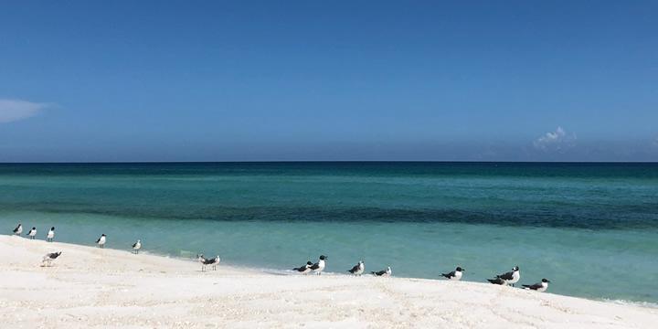 Beautiful Navarre Beach