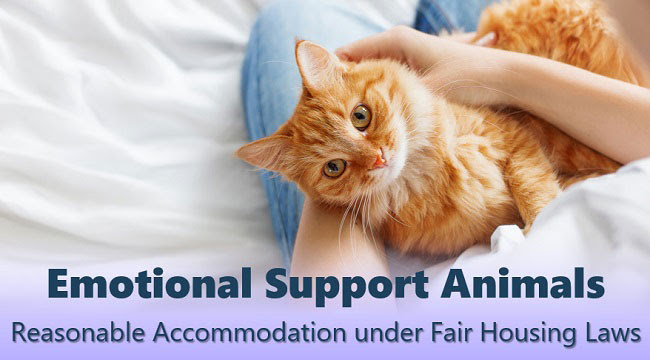Information on Emotional Support Animals in California