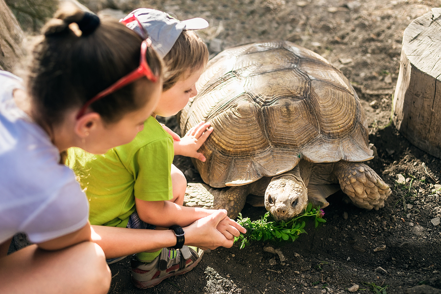 See reptiles on Orinda property.