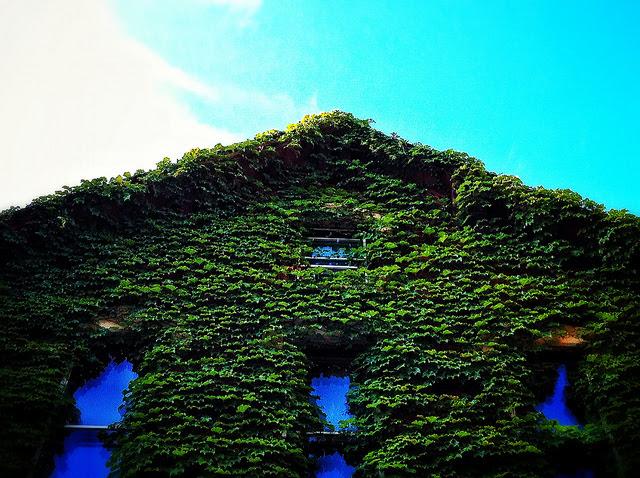 Realtors Say Buyers Want Green Homes