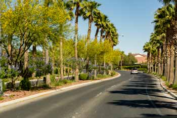 Tree Lined Streets of Nevada Trails Las Vegas Neighborhood
