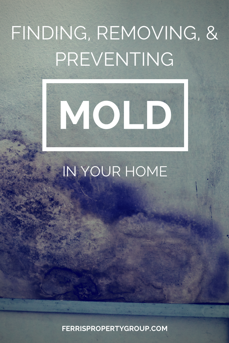 Finding, Removing, and Preventing Mold in Your Home
