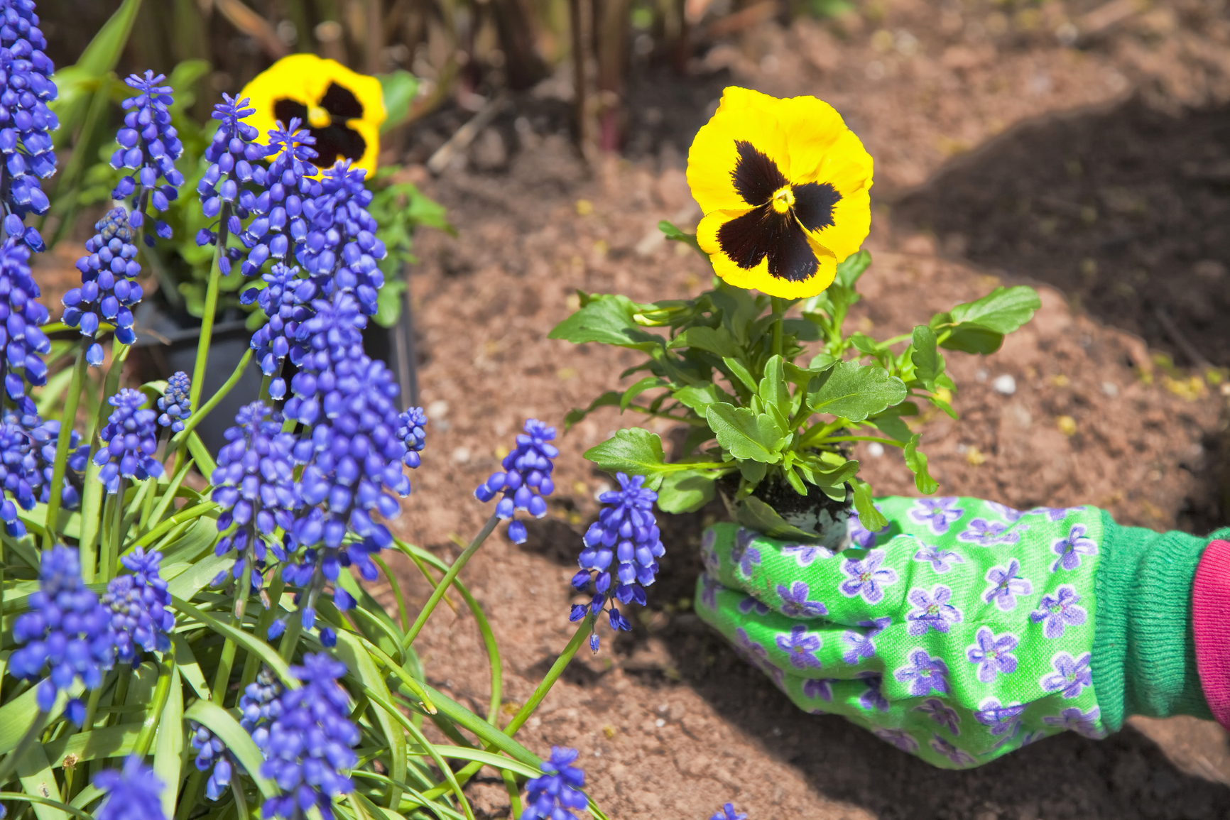 Planning and planting your spring flower beds