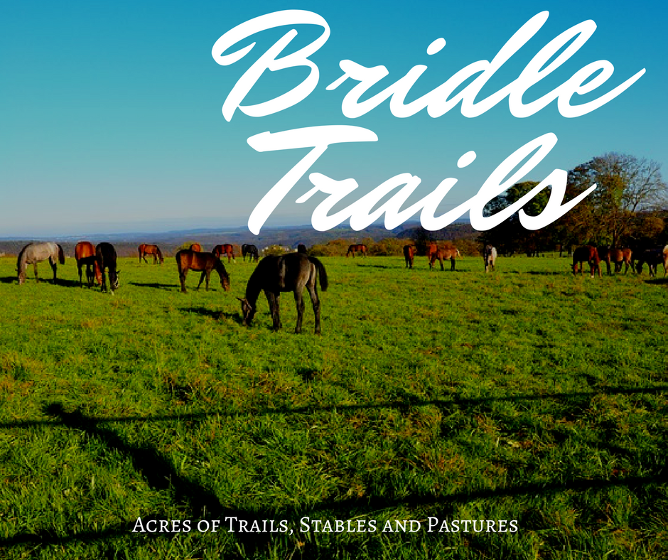 Bridle trails