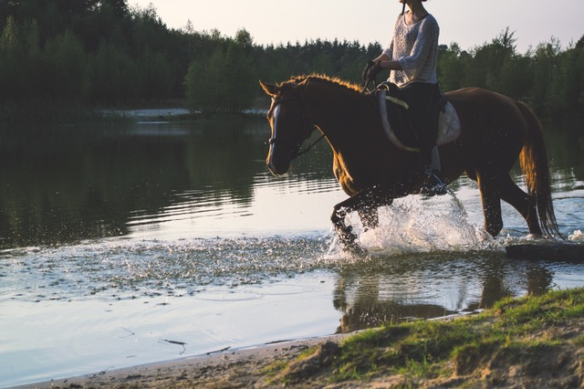 King County horse properties