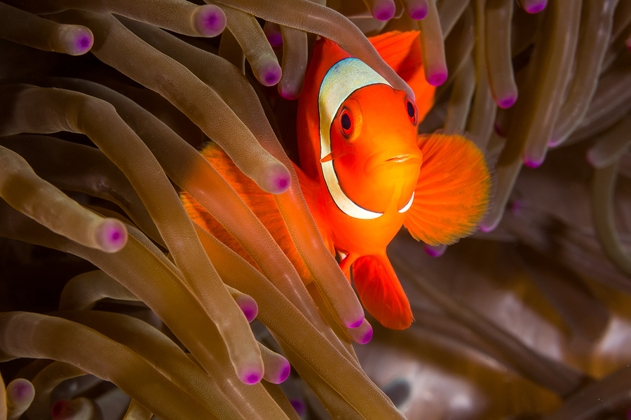 See clownfish who live in Phoenix