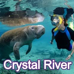 Crystal River Florida Homes for Sale