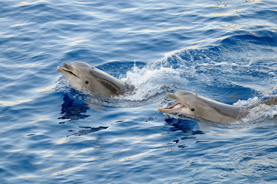 Ride a tugboat near Florida homes and see dolphins.