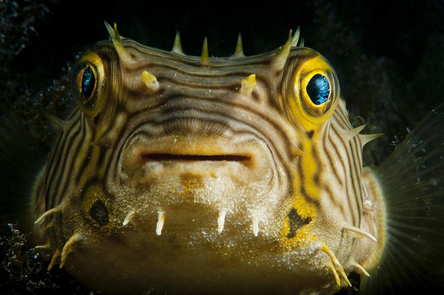 Go to the aquarium near Long Island homes and Long Island real estate.