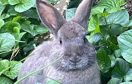 bunny in the greens