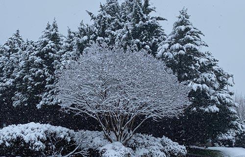 winter in the georgia mountains