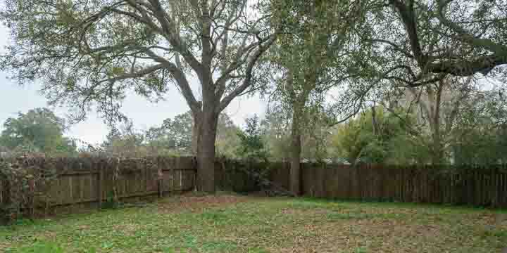 Navy Point backyard with large oak trees