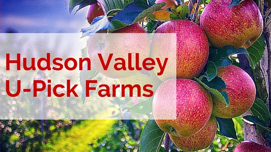 U-Pick Farms in the Hudson Valley