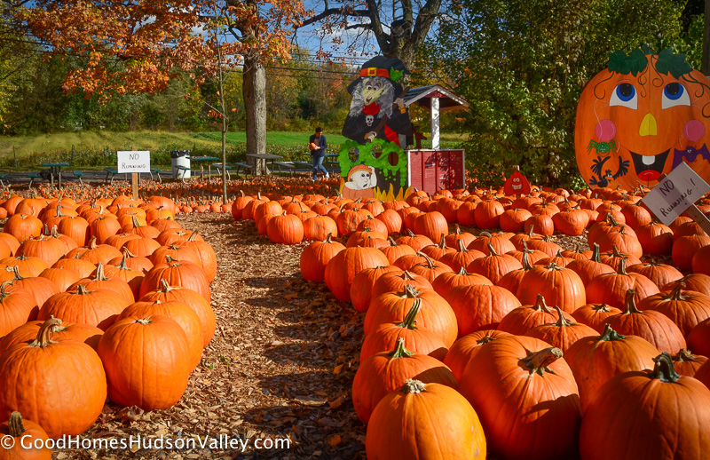 Meadowbrook Farm Pumpkin Patch