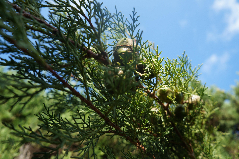 Explore Nature Up Close Near Sabre Springs Homes