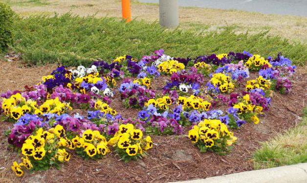 greenville nc flowers on real estate