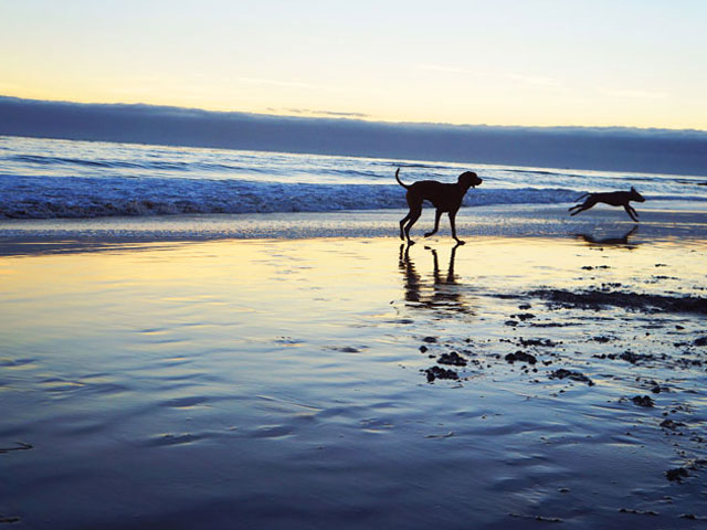 mitchells cove beach