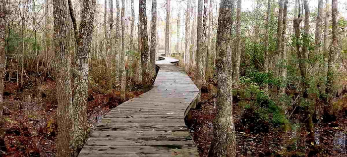 Wooded Walkways in Collins Creek Landing