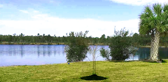 Lake in Forestbrook Reserve