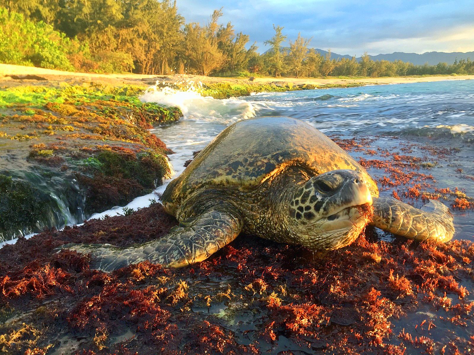 Beachfront North Shore Oahu Haleiwa