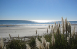 White Sandy Beaches in Palmetto Dunes, Hilton  Head,  SC
