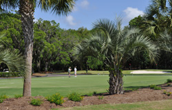 View of practice green at the Shipyard Golf Club in Hilton Head Island, SC