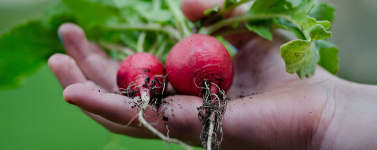 5 Tips To Get The Most Out Of Your Vegetable Garden