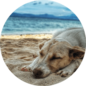 Hilton Head Pet Friendly Villas