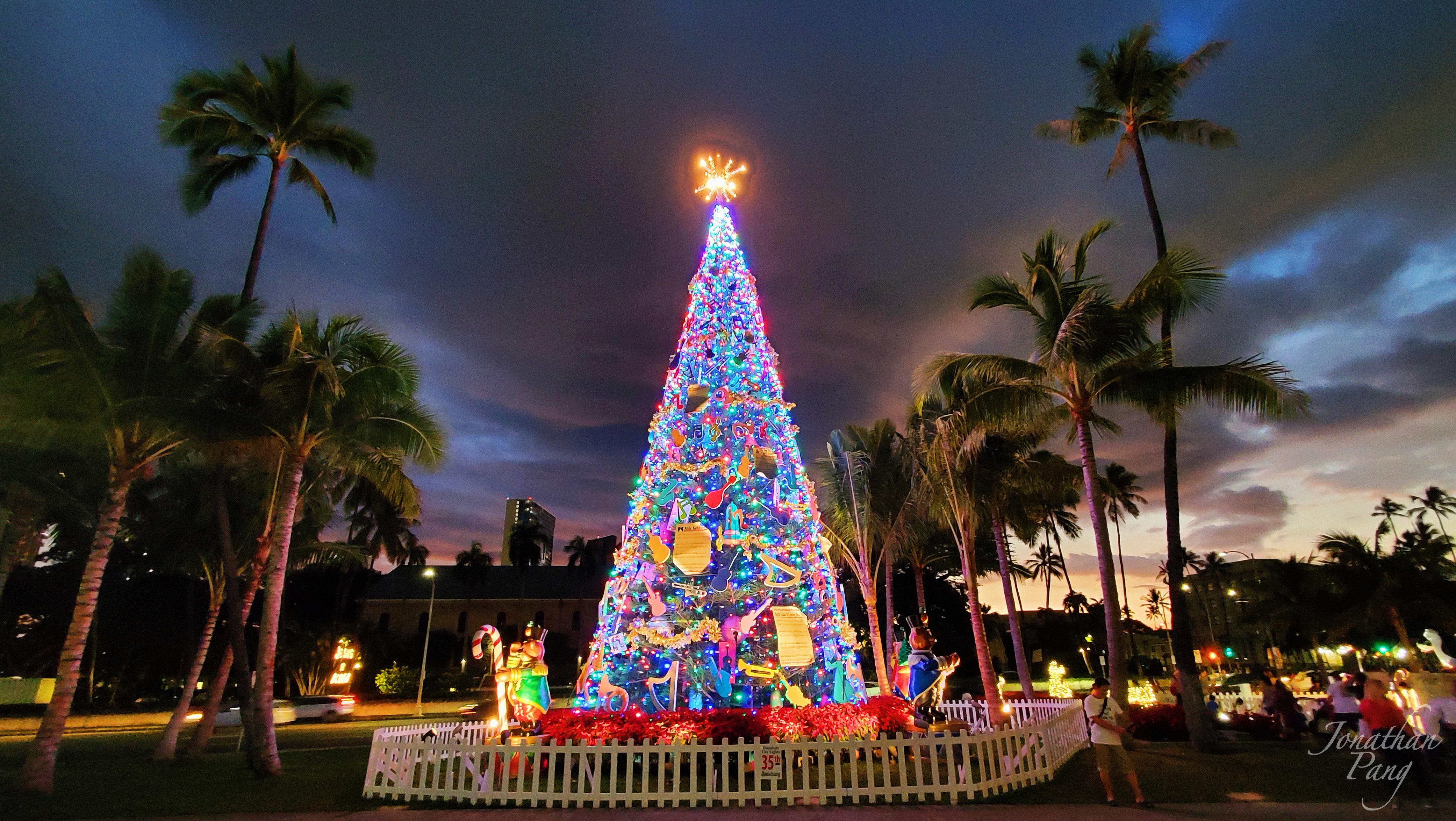 Honolulu Hale Christmas Tree