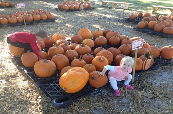 Hampstead Pumpkin Patch