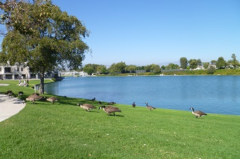 Only Woodbridge residents and ducks are allowed into nearby South Lake