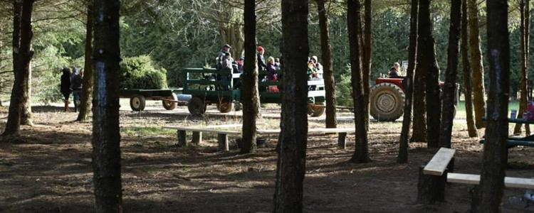 Tree Lane Farms Ilderton Ontario