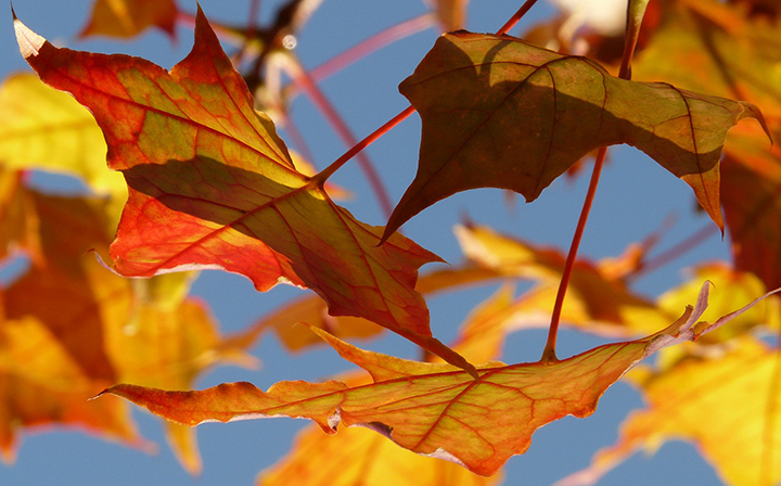 Why Do People List Their Homes In The Fall?