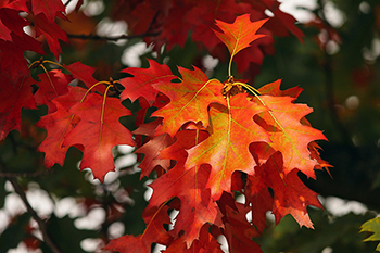 Great Home Maintenance Tips For Fall!
