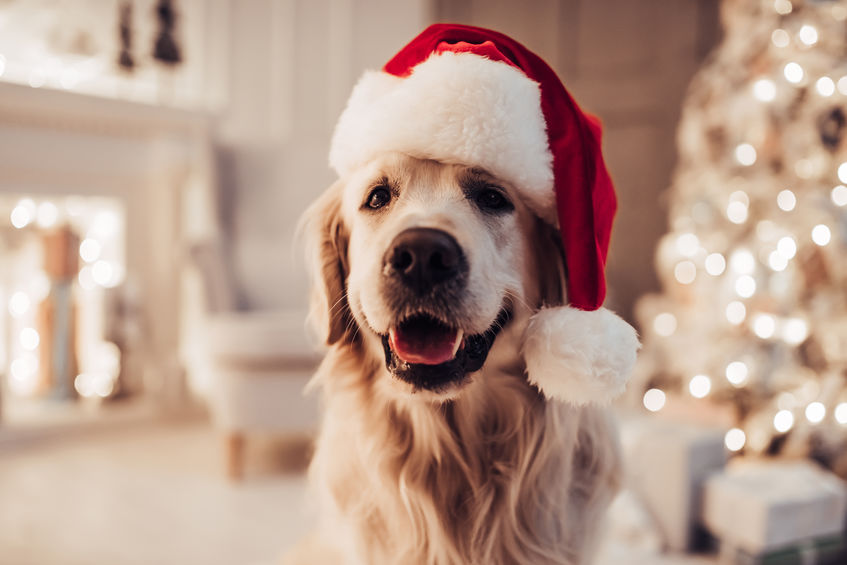 Keep Your Pets Safe During the Holidays in Berks County