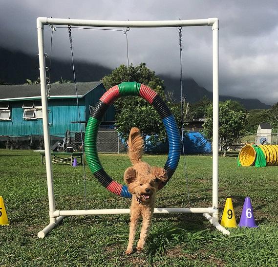 doggie thru hoop